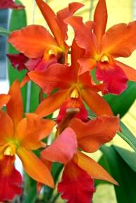 #orchid #marytanana #groovitydesigns #myvisualnirvana #garden
