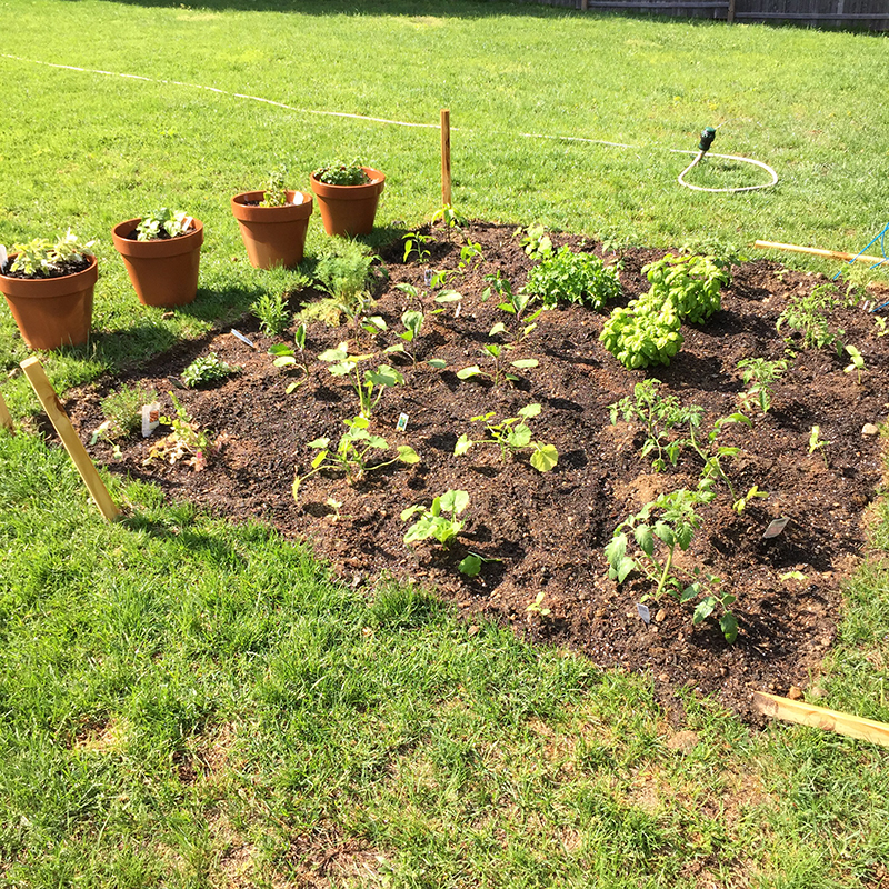 my garden-country-grow-vegetable-rocky point-rhode island